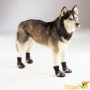 Botinha Jamboots Classic para Cães