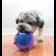 Brinquedo Kong Hopz Ball Dispenser Ração